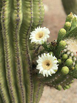 Desert Flower Images Pixabay Download Free Pictures