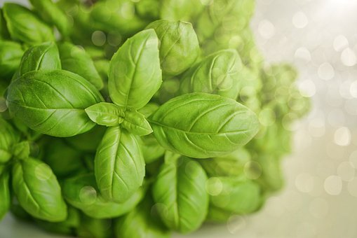 Basil, Green, Herb, Food, Fresh