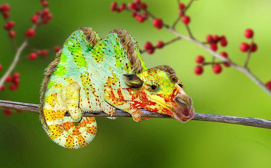Digiart, Kameel, Chameleon, Kameleon