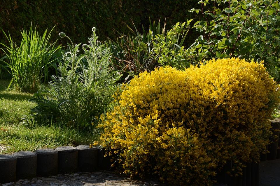 Bush yellow spring flowering free photo on pixabay bush yellow spring flowering shrub nature garden mightylinksfo