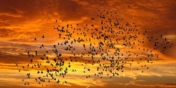 Emotions, Nature, Sunrise, Bird Flight