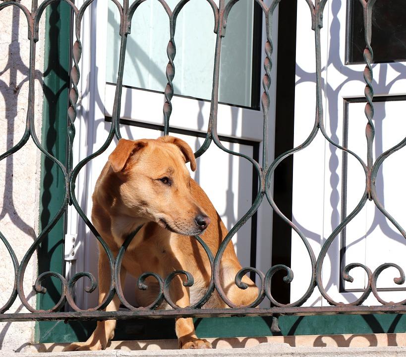 Deja a su perro atado en el balcón a pleno sol
