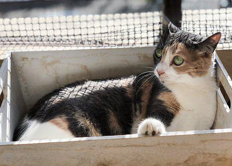Gata, Cat, Cute Cat, Cat Home