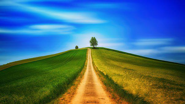 Away, Hill, Fields, Tree, Road, Lonely