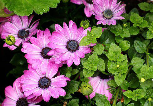 Purple Flowers Images Pixabay Download Free Pictures