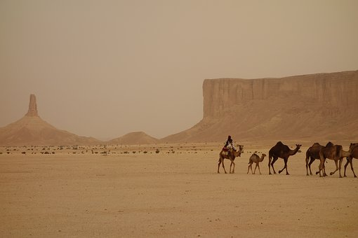 ラクダの列車, サウジアラビア