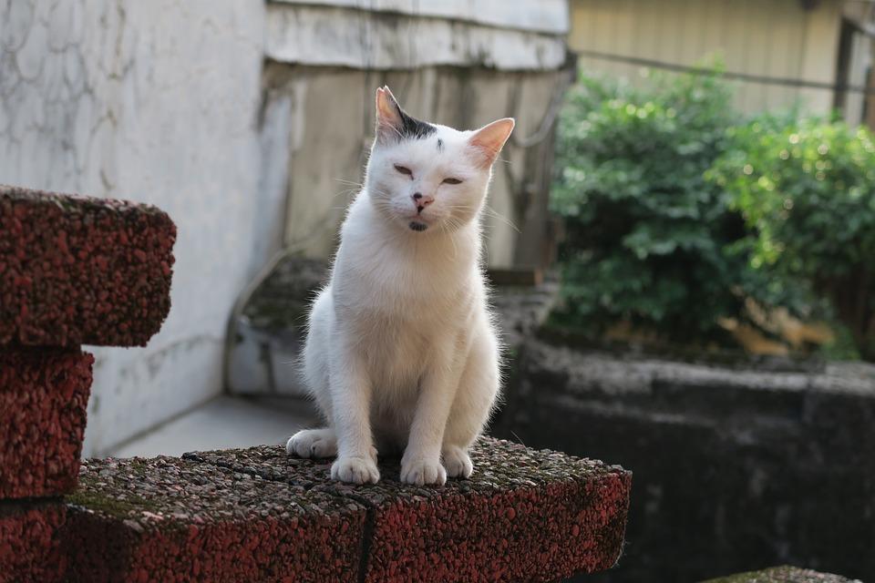 Gatto, Insonnia, Animale