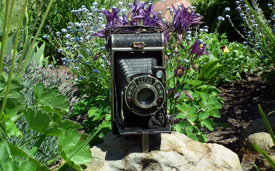 Camera, Historic, Old Camera, Photo, Lens, Flowers