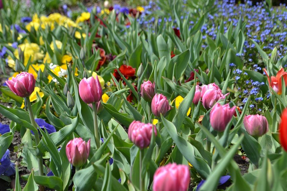 Fleurs Jardins Fleur - Photo gratuite sur Pixabay