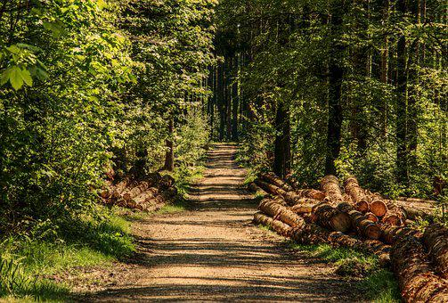 Trees, Forest, Forest Path, Sunlight