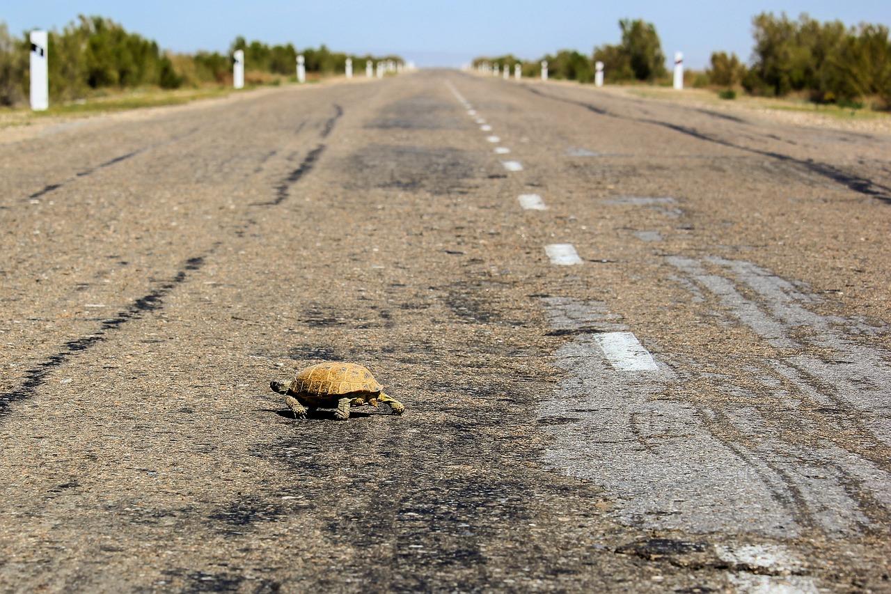 Tortoise Road Shell - Free photo on Pixabay