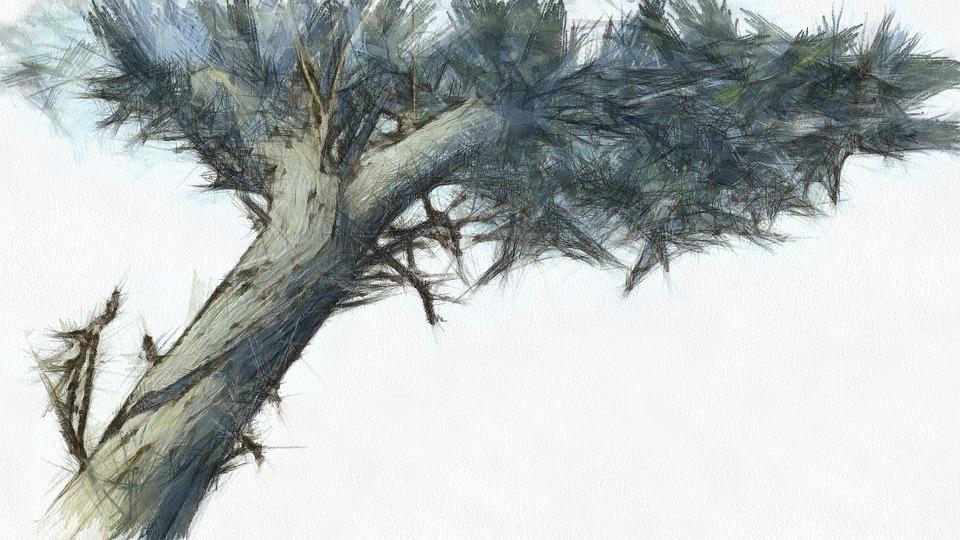Boyama Ağaç Artistik Pixabayde ücretsiz Resim