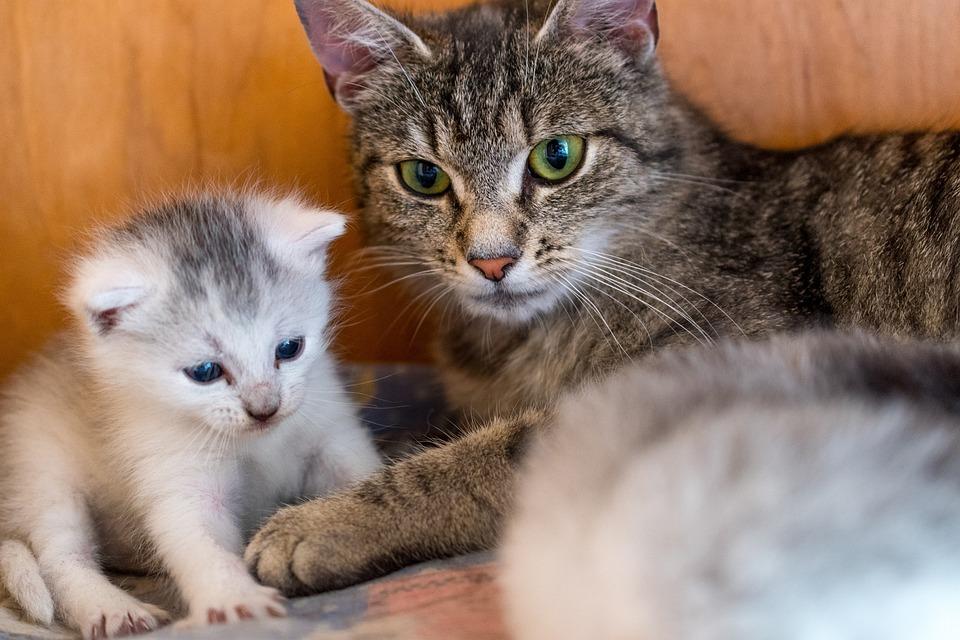 d2c18ba6fce4 Γατάκι Γάτα Νεαρή - Δωρεάν φωτογραφία στο Pixabay