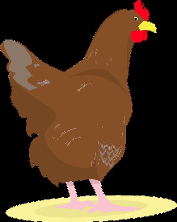 ベクトル鶏腿足漫画イラスト セットをスケッチします白地生鶏肉