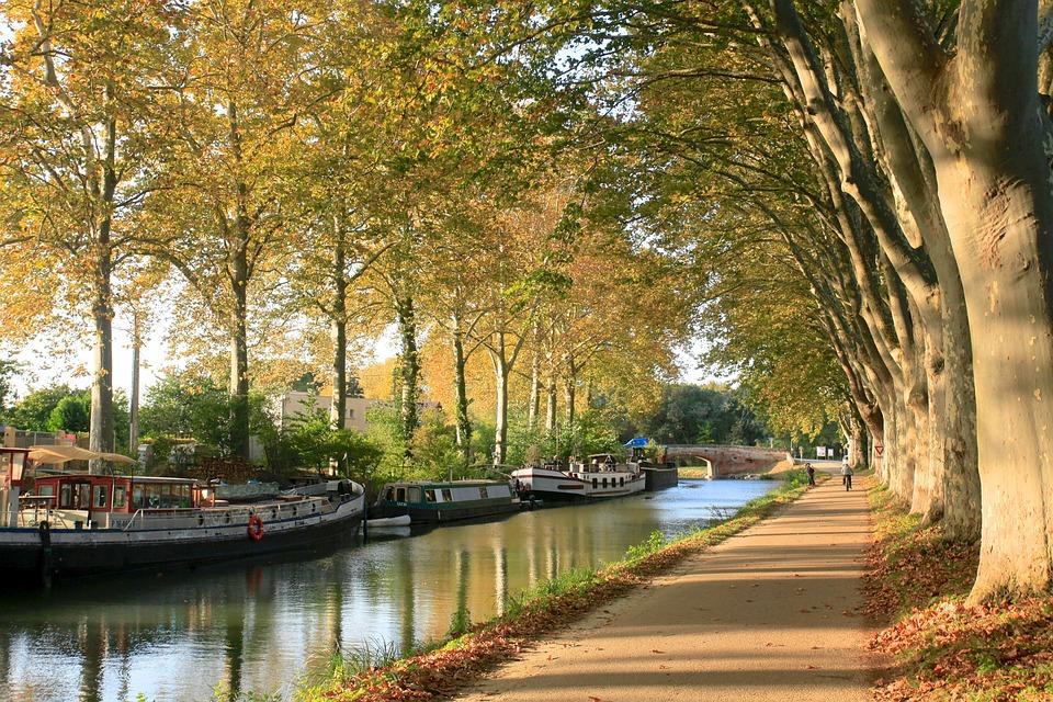 Canaldumidi, Toulouse, Arbres, Automne, Haute-Garonne