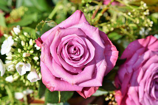Pink flowers images pixabay download free pictures rose rose bloom pink rose garden mightylinksfo Gallery