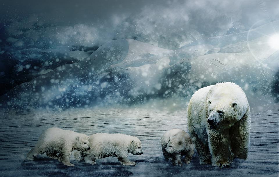 Международный арктический форум: Арктика 2020