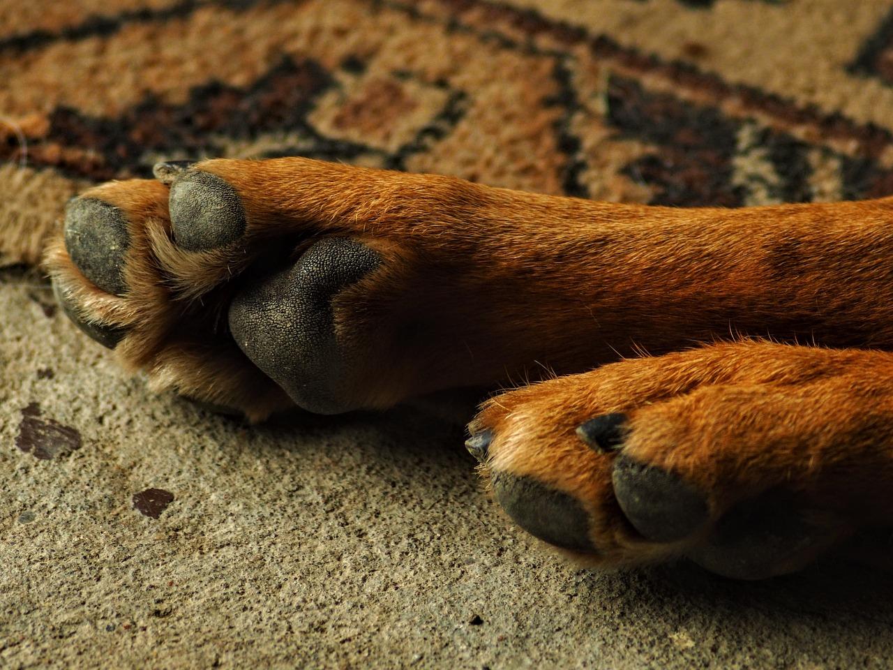 фото лапки собаки все