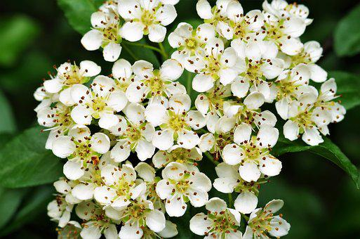 White flowers images pixabay download free pictures flowers white flowers mightylinksfo Choice Image