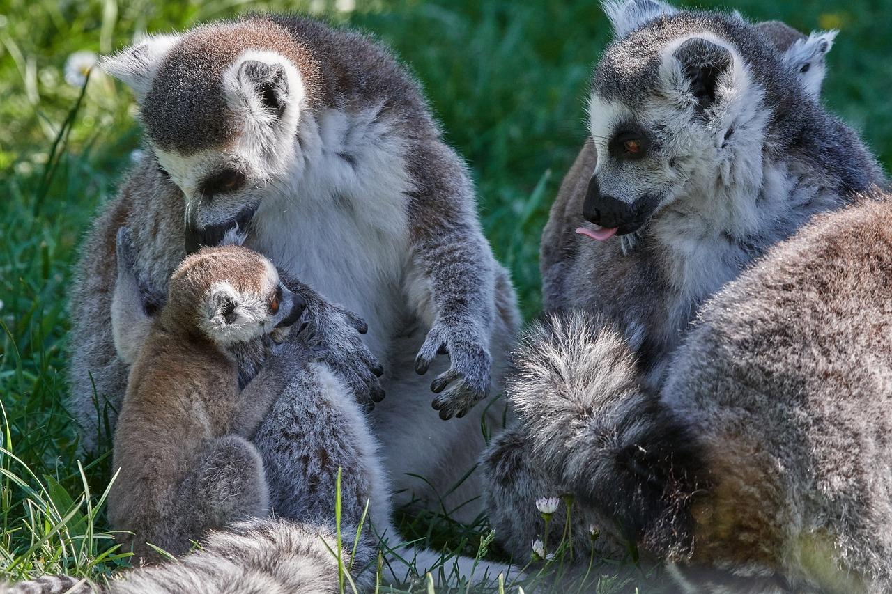 психология фотографии животное с детенышем рамках лекции родион