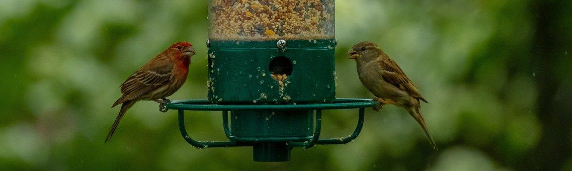Birds, Bird Feeder, Feeder, Wildlife
