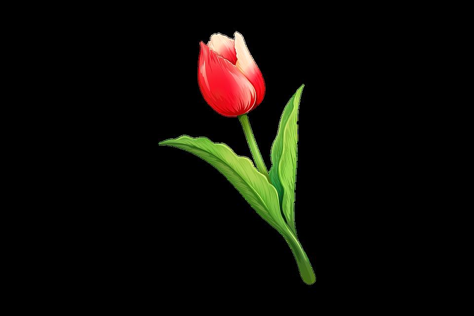 Lalea Floare Naturale Imagine Gratuită Pe Pixabay