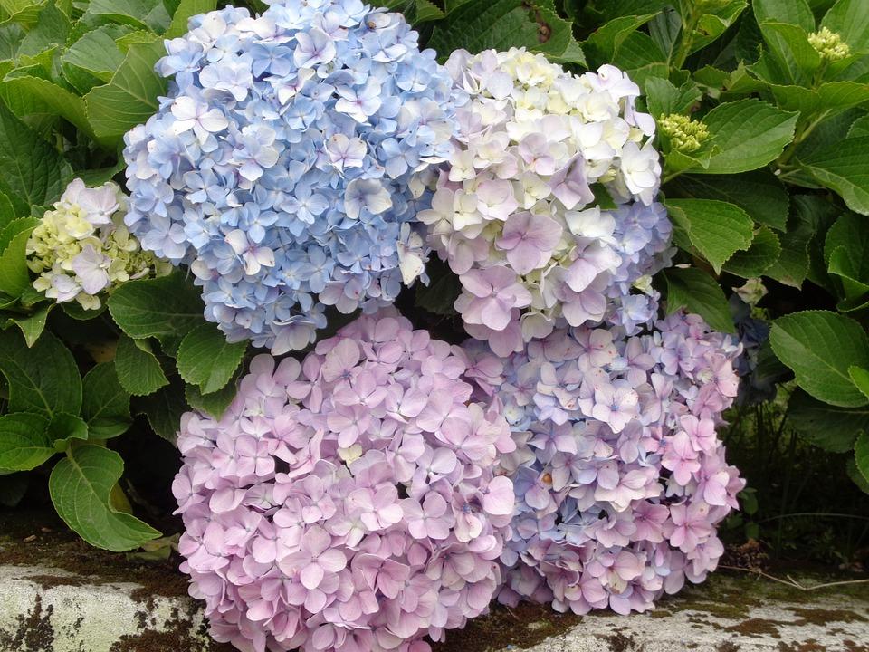 Blumen Namen Bilder Kostenloses Foto Auf Pixabay