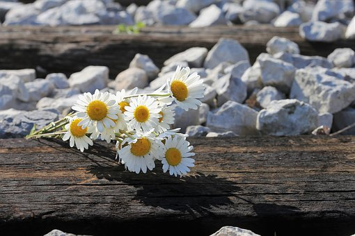 Daisy Bouquet On Railway, Loving Memory