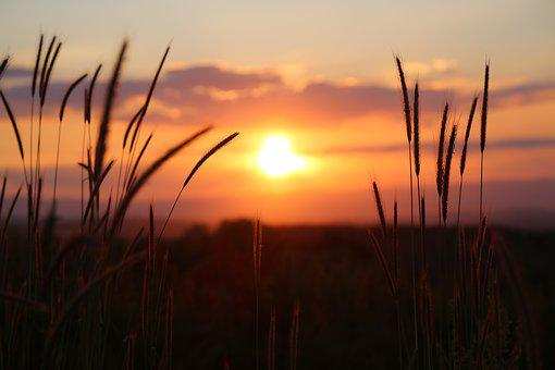 サンセット, 自然, 夕方には, 植生, 空, サンセット, サンセット