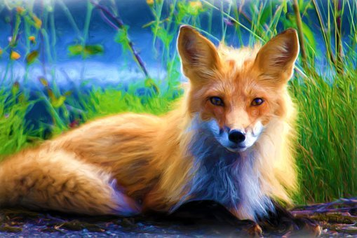 Fuchs, Grass, Nature, Animal, Wild