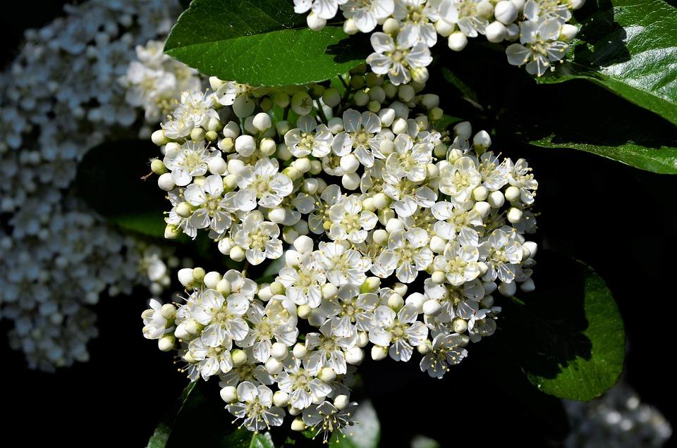 Bloom flower white free photo on pixabay bloom flower white white flower stamens mightylinksfo Gallery