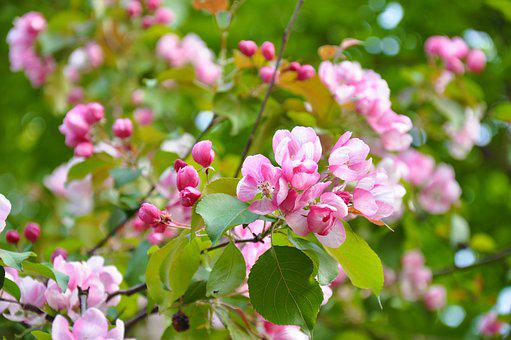 Flowering trees images pixabay download free pictures spring bloom flowers flowering tree mightylinksfo Image collections