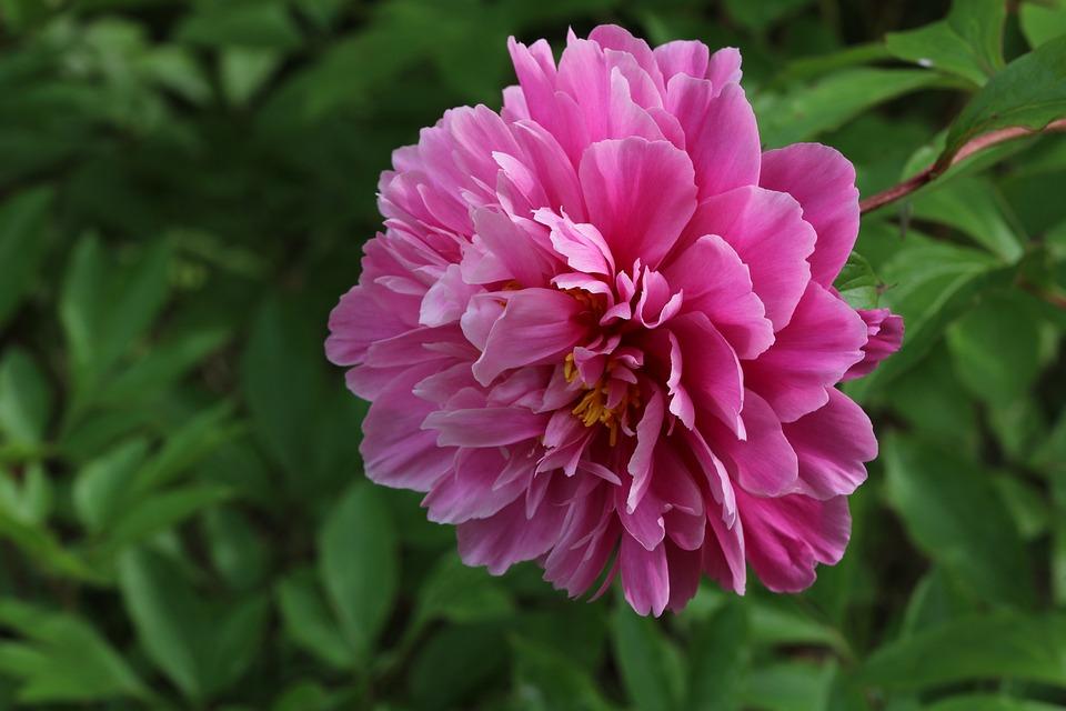 Rose piante fiori foto gratis su pixabay