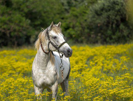Horse, Meadow, Spring, Animal, Landscape
