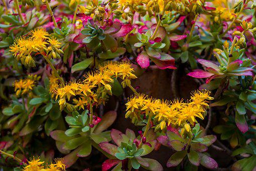 Yellow flowers images pixabay download free pictures flowers yellow yellow flower flower mightylinksfo Choice Image