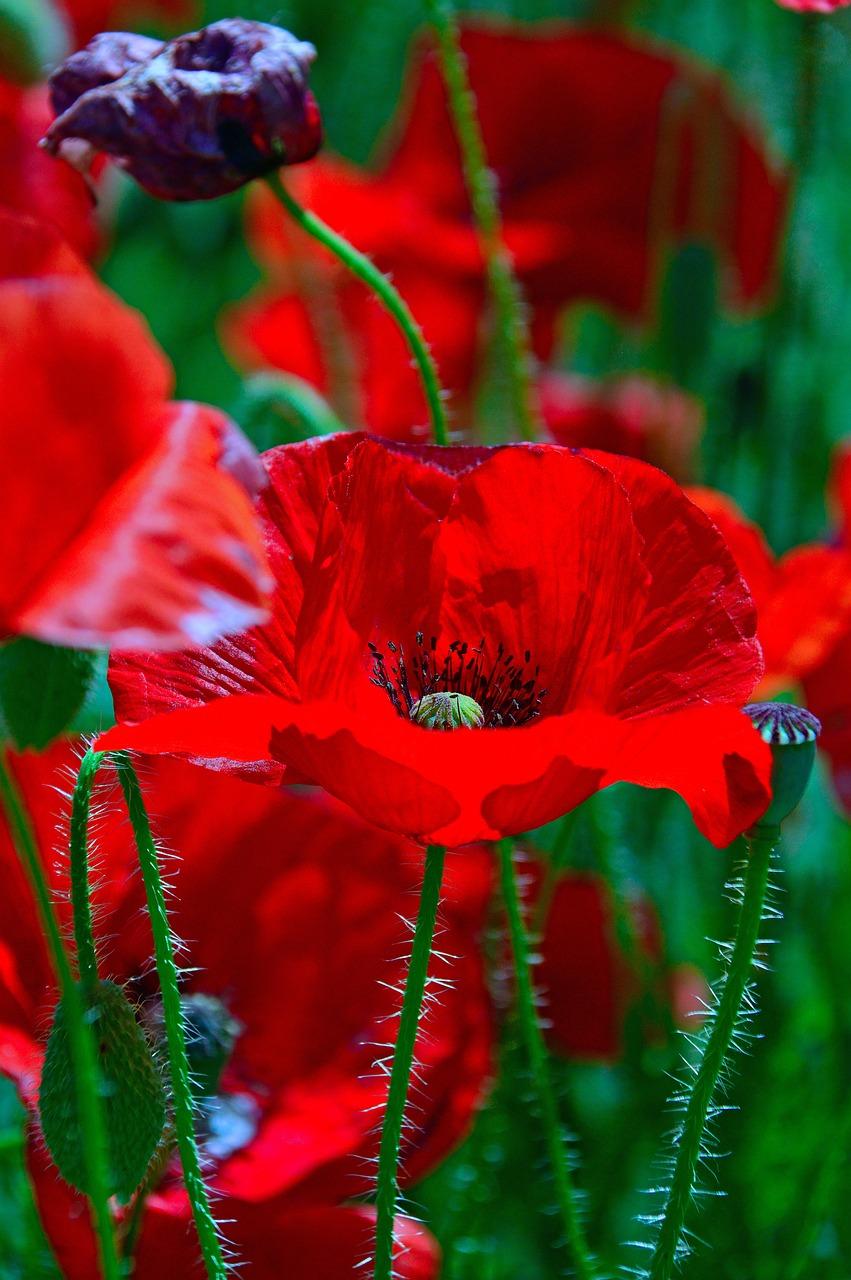 Красные только красные цветы фото более того