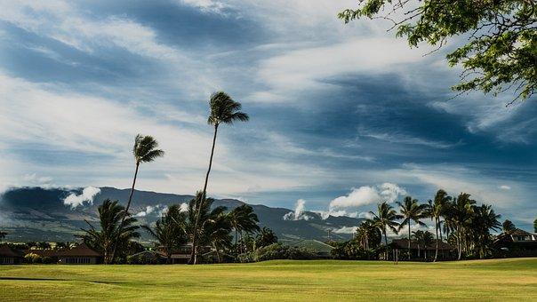 Maui, Palm, Green, Blue, Coconut, Sky