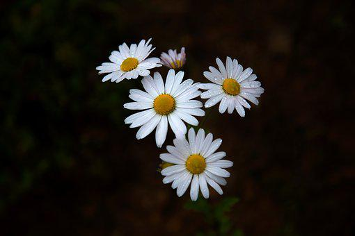 White flowers images pixabay download free pictures mightylinksfo Image collections