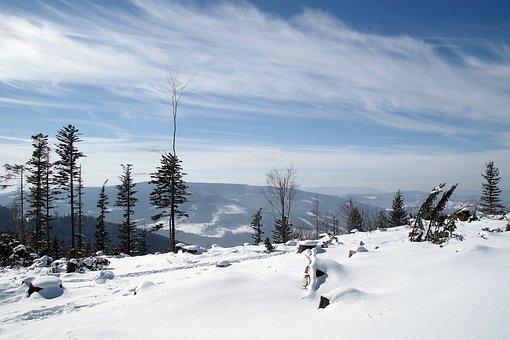 Winter, Mountains, Snow, White, Tree