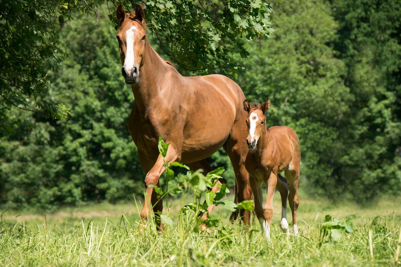 картинки лошадь и жеребята показывает