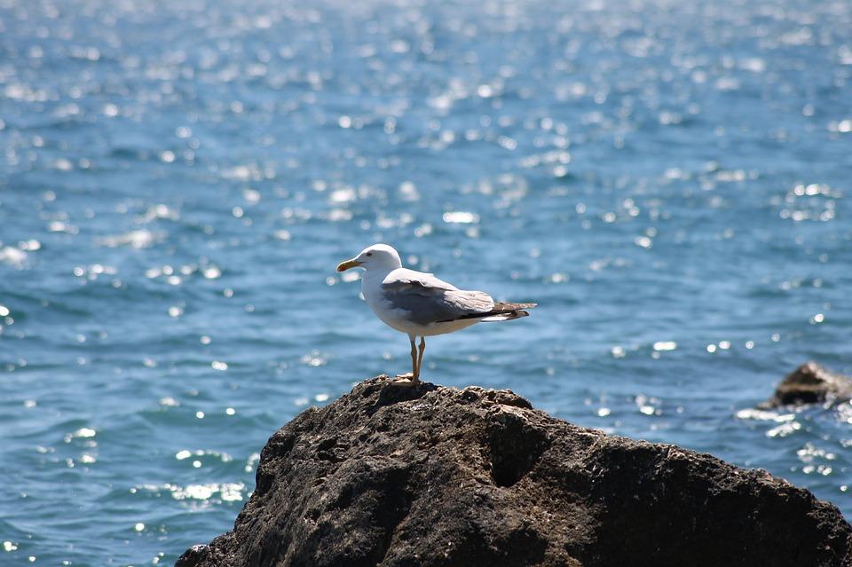 хлебница отвечает чайка над морем фото для