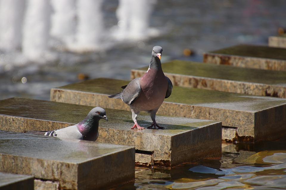 Resultado de imagem para pombos em berlim