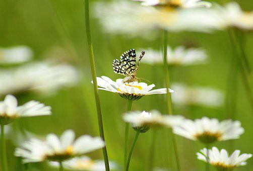Spring flowers images pixabay download free pictures flowers spring insect butterfly mightylinksfo Images