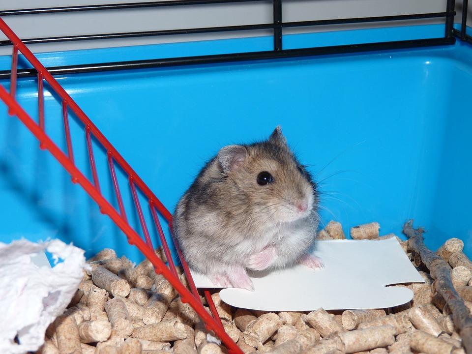 Hamster videoer