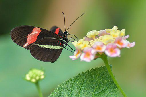 Butterfly, Black, Insect, Flower