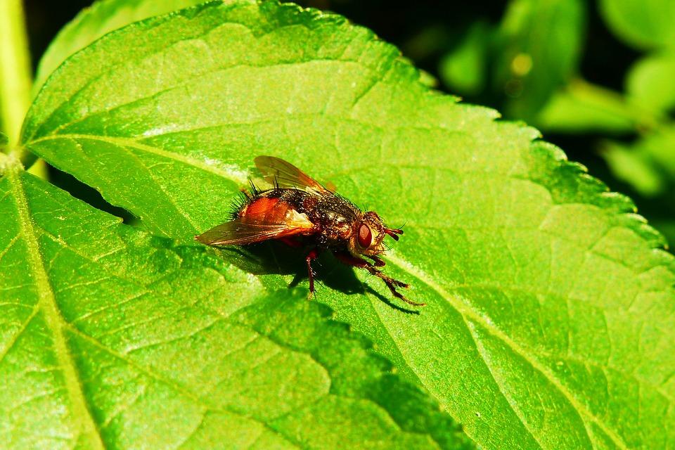 990 Gambar Hewan Invertebrata Terbaik