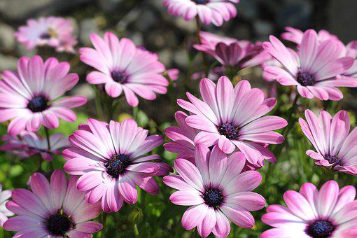 Pink flowers images pixabay download free pictures flowers pink flowers plants nature mightylinksfo Gallery