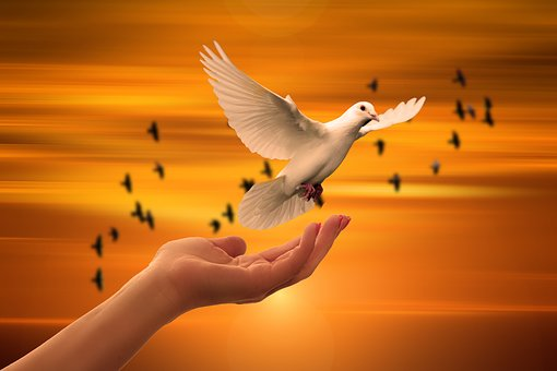 Dove, Hand, Trust, God, Pray, Prayer