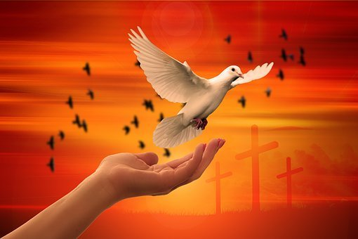 300+ Free Dove Of Peace & Dove Images - Pixabay
