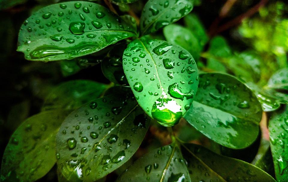 Planta Hoja Verde La Lluvia Gotas - Foto gratis en Pixabay